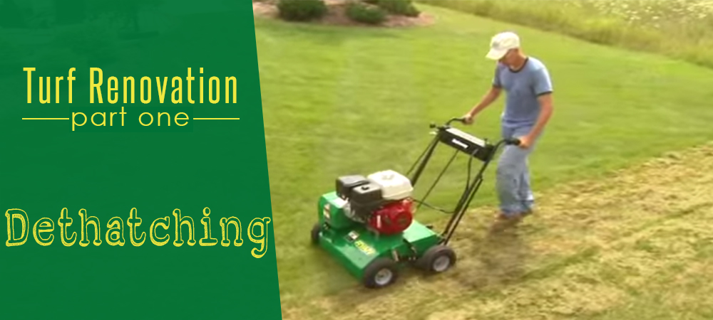 Turf Renovation Part One: Dethatching