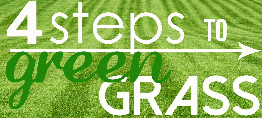 4 Steps to Green Grass