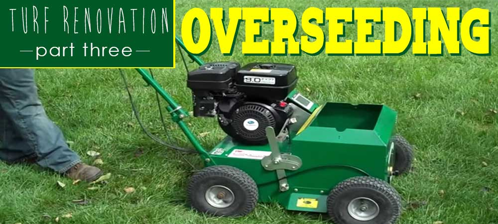Turf Renovation Part Three: Overseeding