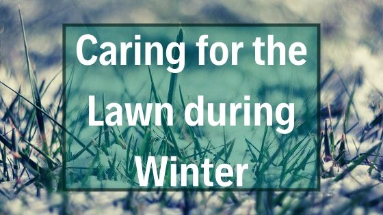 How to Take Care of the Lawn in the Winter