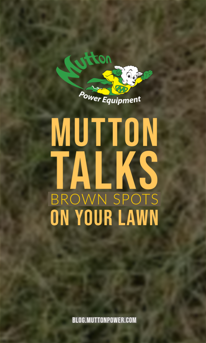 What is Causing Brown Spots and Dead Grass in your Lawn?